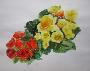 Yellow and Red Begonias, June 28, 2011