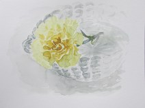 Yellow carnation, Feb. 18, 2012 watercolour on paper