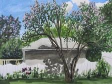 Honeysuckle in Bloom, Jun. 11, 2012 watercolour on paper