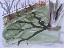 Backyard Shadows #1, May 9 2013, watercolour on paper 9 x 11