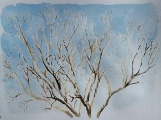 "Honeysuckle Tree, Mar. 2016, watercolour on paper, 11""x14"""
