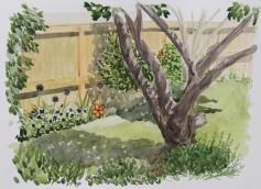 Shade Garden View, Jun. 11, 2017